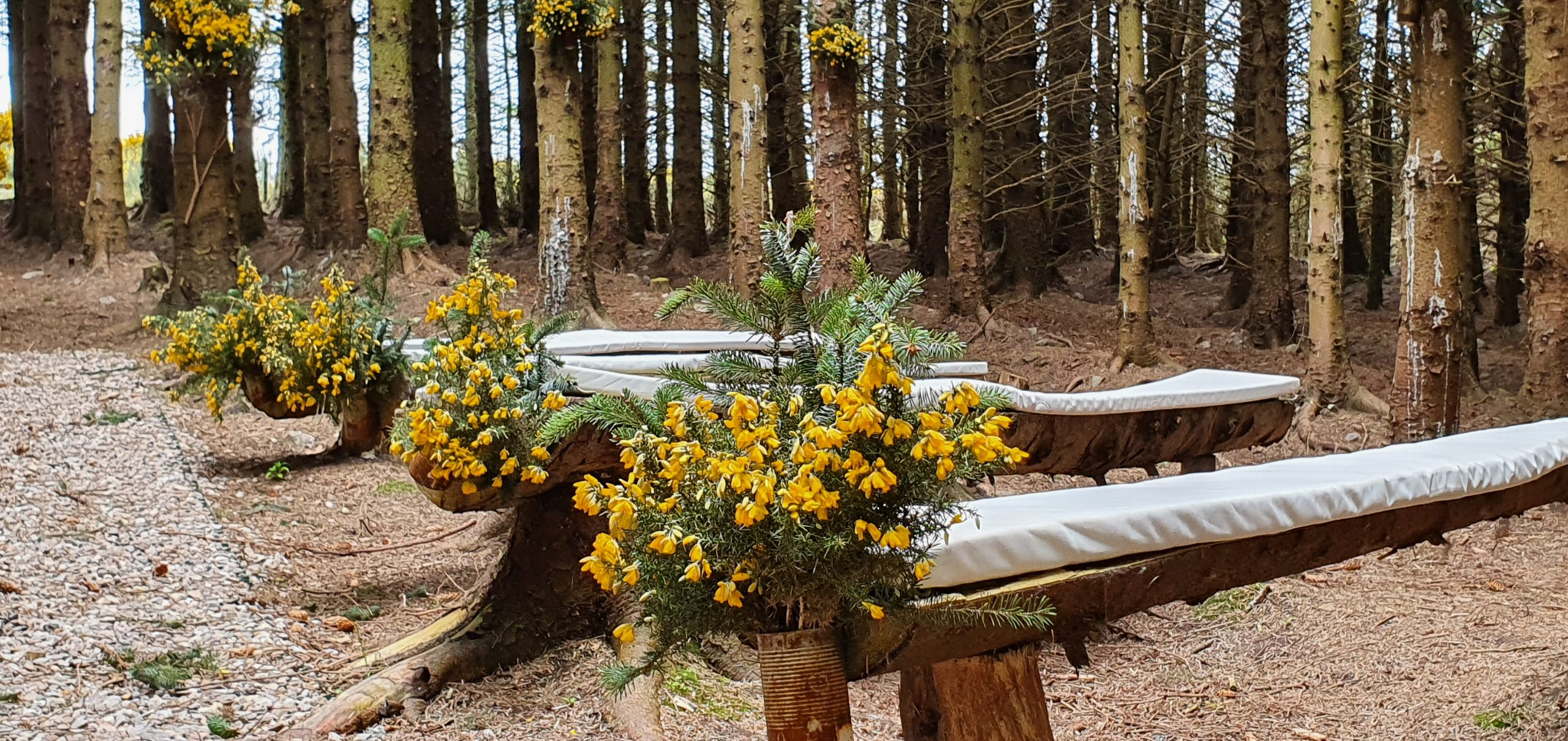 woodland cathedral festooned with gorgeous yellow flowers