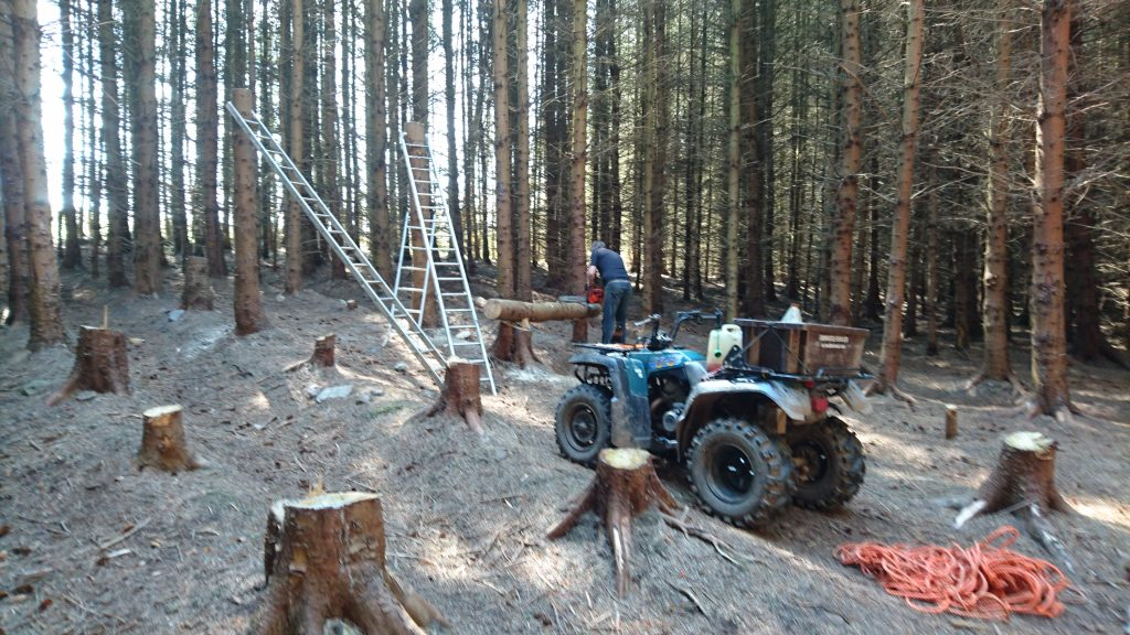clearing the woodland to build our unique woodland cathedral