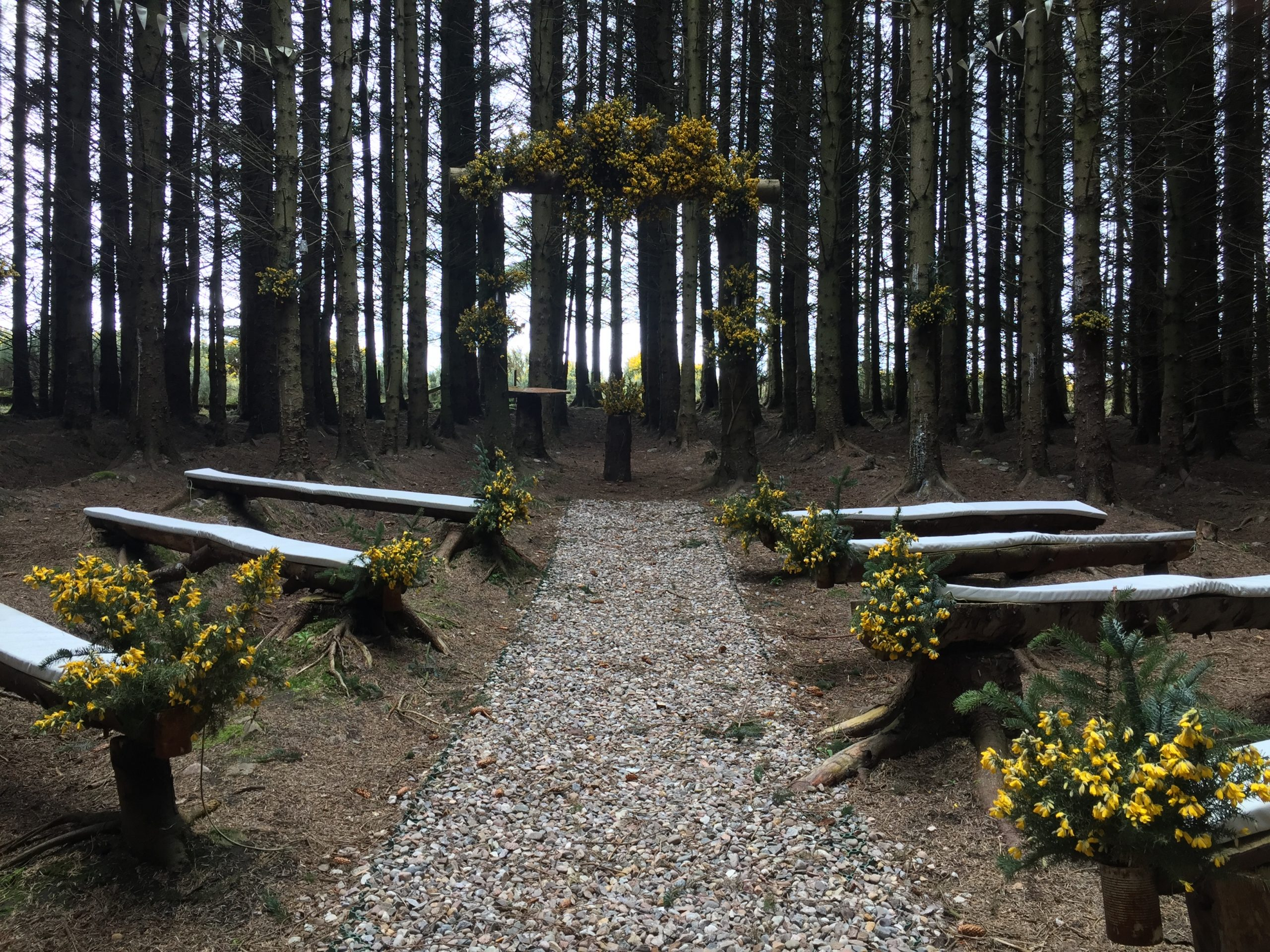 stunning woodland cathedral festooned with yellow flowers